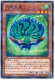 JF13-JPB08 Nine-Snakes Peacock
