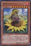 SHSP-JP040 Princess of Sunflowers, Marina