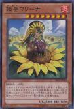 SHSP-JP040 Princess of Sunflowers, Marina